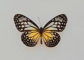 Poliklinika Leptir Štitnjača